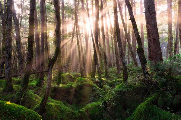 Adapted via Creative Commons: https://www.flickr.com/photos/agustinrafaelreyes/15264214401
